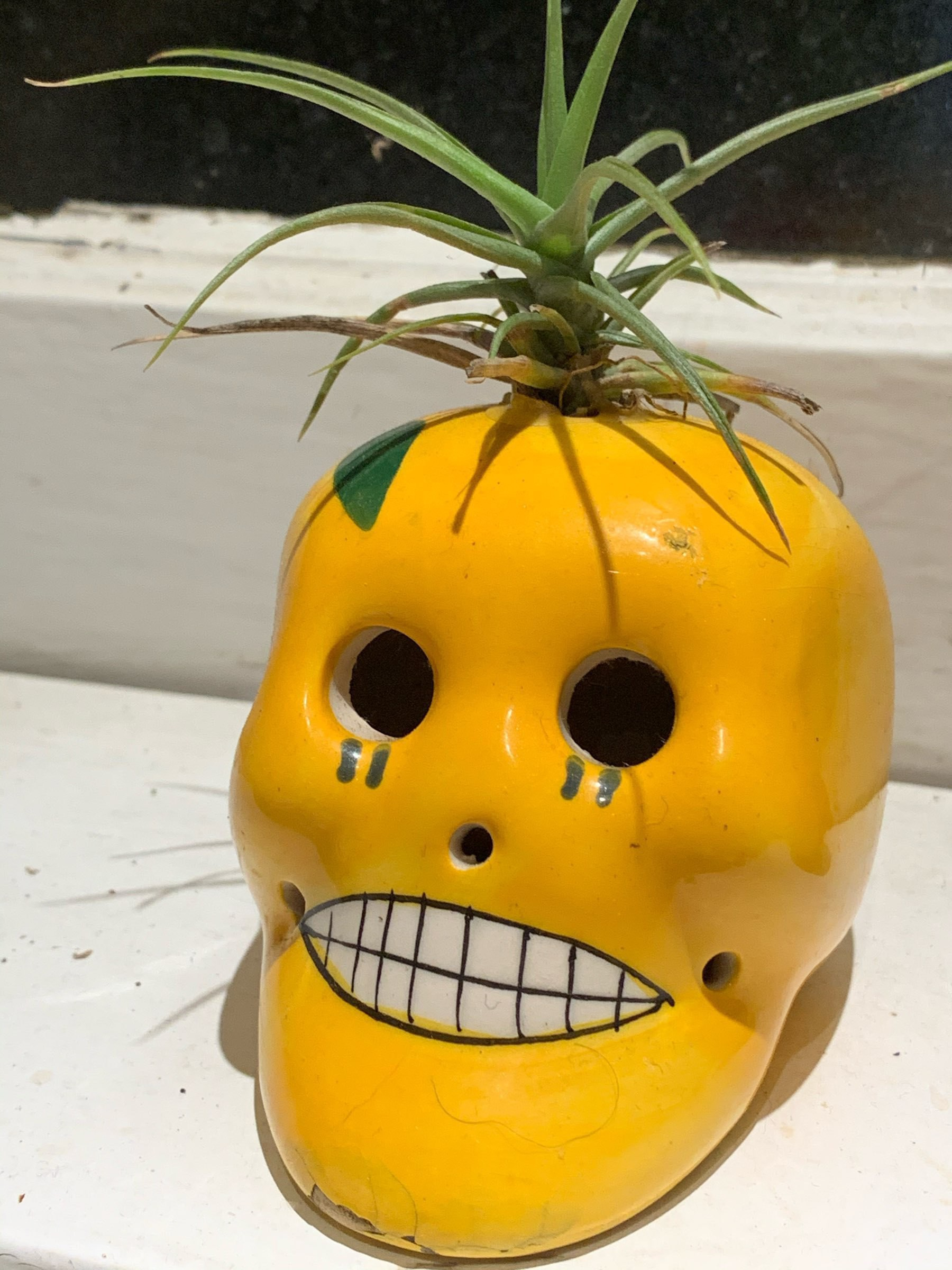 yellow ceramic skull with air plant growing out of the crown on the skull